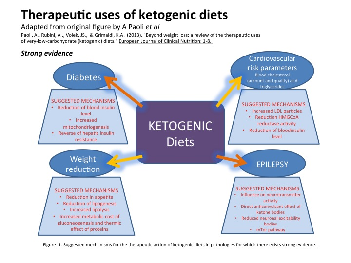 How ketogenic (low carb high fat) diets work – The Science of Human Potential