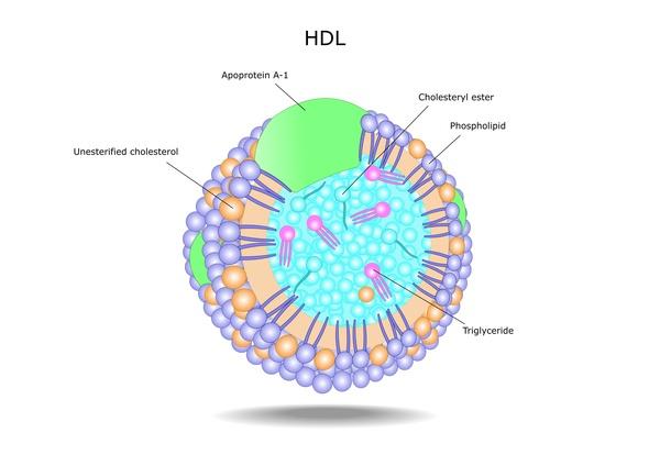 Lipoproteína LDLc (soro/plasma) Descrição